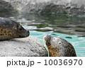 見つめ合う二頭のゴマフアザラシ 旭山動物園 (旭川市) 10036970