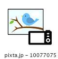 野鳥の撮影 10077075