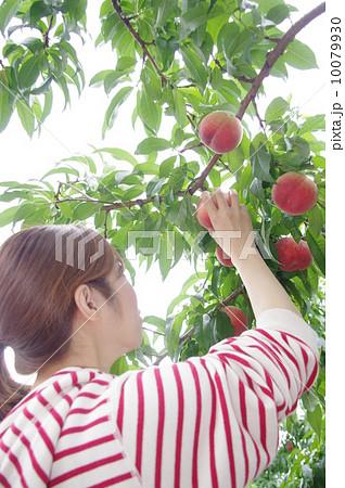 桃を採る女性 10079930