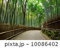 京都 京都市 京都府の写真 10086402