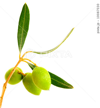 Fresh olivesの写真素材 [10087030] - PIXTA