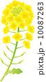 菜の花 10087263