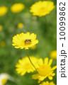 オグルマと蜂 10099862
