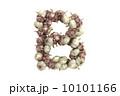 文字 にんにく ガーリックのイラスト 10101166