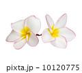 要素 元素 分子の写真 10120775