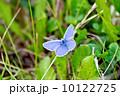 植物 昆虫 草の写真 10122725