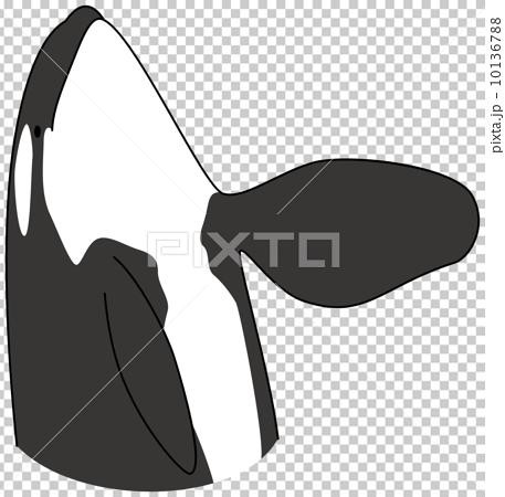 逆戟鲸 鲸鱼 海豚 10136788