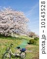 多摩川のサクラ 2014 10143528