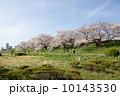 多摩川のサクラ 2014 10143530