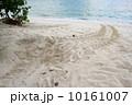 ウミガメの産卵 10161007
