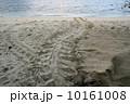 ウミガメの産卵 10161008