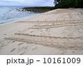ウミガメの産卵 10161009