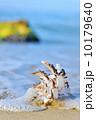 湾 動物 きれいの写真 10179640