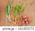 野菜 10185573