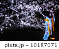 桜と浴衣 10187071