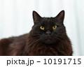 黒猫 10191715