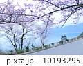 桜 10193295