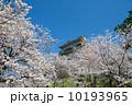 小田原城 天守閣 満開の写真 10193965