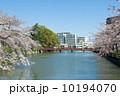 小田原城 学橋 春の写真 10194070