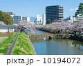 小田原城 濠 桜の写真 10194072