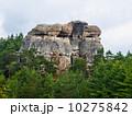 チェスキー ボヘミア地方 ビューティーの写真 10275842