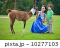 Woman and her son feeding baby lama in farm 10277103