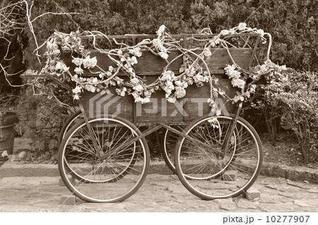動く花畑の写真素材 [10277907] - PIXTA