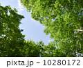 緑 空 葉の写真 10280172