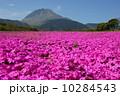 芝桜 草花 島原芝桜公園の写真 10284543