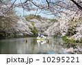 井の頭恩賜公園 満開 春の写真 10295221