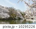 井の頭恩賜公園 満開 春の写真 10295226