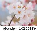 桜 10299359