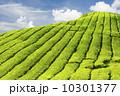 農業 農耕 ブルーの写真 10301377
