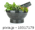 バジル 芳香植物 お香の写真 10317179
