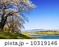 千本桜 桜 ソメイヨシノの写真 10319146