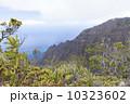 カウアイ島のホノプ渓谷 10323602