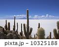 ウユニ塩湖 インカ・ワシ島 サボテンの写真 10325188