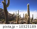 ウユニ塩湖 インカ・ワシ島 サボテンの写真 10325189