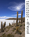 ウユニ塩湖 インカ・ワシ島 サボテンの写真 10325191