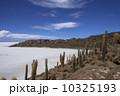 ウユニ塩湖 インカ・ワシ島 サボテンの写真 10325193