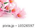 人工的 1年草 美の写真 10326597