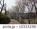 4月 ソメイヨシノ 桜の写真 10333296