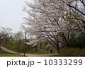 4月 ソメイヨシノ 桜の写真 10333299