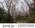 4月 ソメイヨシノ 桜の写真 10333300