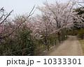 4月 ソメイヨシノ 桜の写真 10333301