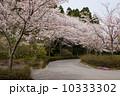 4月 ソメイヨシノ 桜の写真 10333302