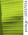バナナの葉 10337554