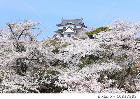 桜満開の彦根城 10337585