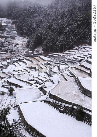 四谷の千枚田、冬景(二月) 10382367