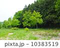 森 林 新緑の写真 10383519
